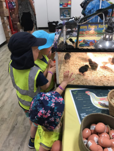 2.4f Children become socially responsible and show respect for the environment. This is evident when children explore relationships with other living and non-living things and observe, notice and respond to change.
